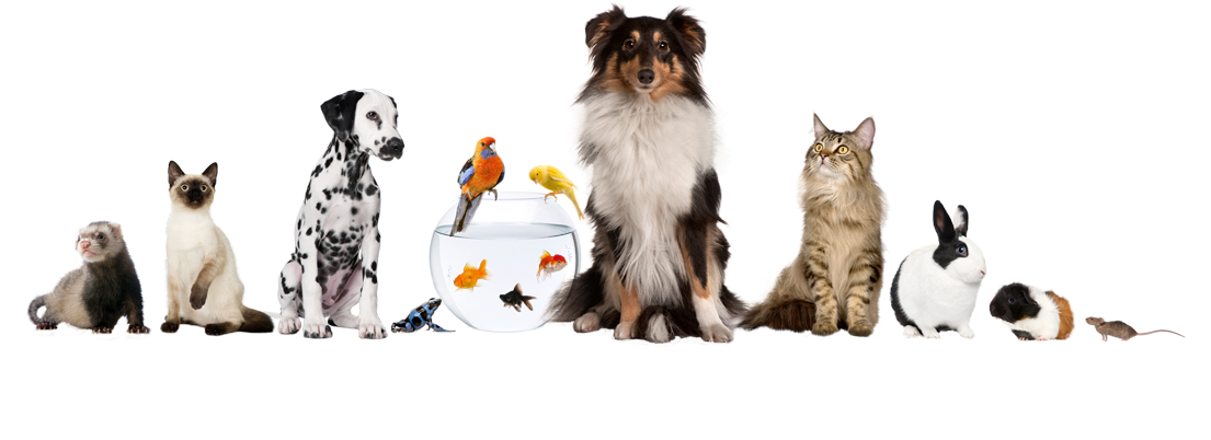 all-pets---shutterstock_76686721.png
